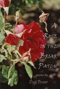 A Rose in the Briar Patch by Dan Tharp